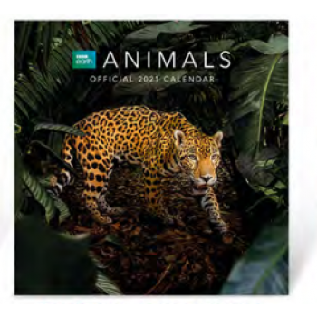 Danilo Calendar - BBC EARTH ANIMALS 2022 SQUARE CALENDAR